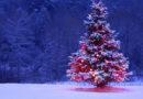 Acheter votre sapin de Noël